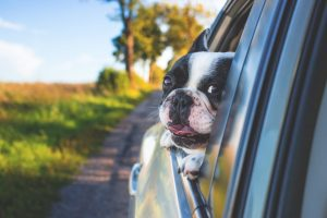 moving pets across canada